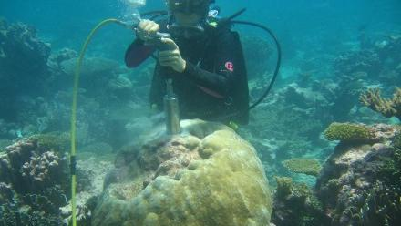 Dr Jess Carilli samples a Porites coral in Kiribati. Image Jess Carilli.