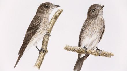 Illustration of birds