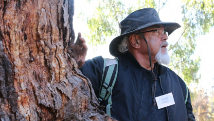 Uncle Wally Bell standing next to a native Australian tree during one of his tours