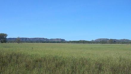 Arnhem land image with  grass by C Steele via flikr