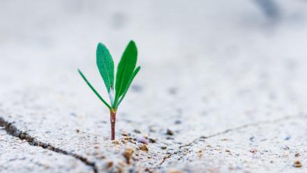 Image: Sprout by Stanislav Kondratiev on Unsplash