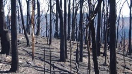 Bushfire image by Elizabeth Donoghue_source Flikr
