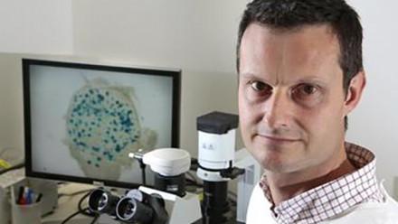 Professor David Tscharke