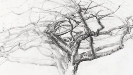 Image: Elizabeth Cross, Prunus, Paris 1996. Courtesy of the artist.