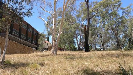 Endangered grassy woodlands tour Tues 28 Nov 12.30pm-1.30pm