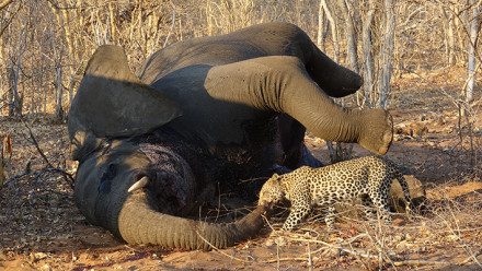 Poaching and wildlife crime in southern Africa