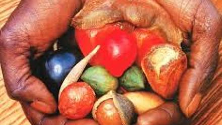 bushfoods