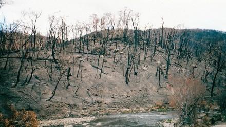 Bushfires by John O'Neill