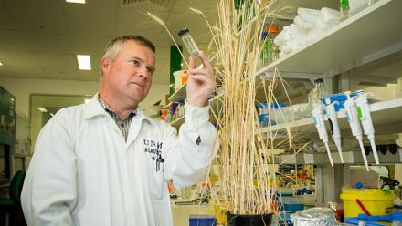 Professor Peter Solomon. Image: Stuart Hay, ANU