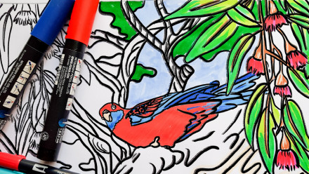 Crimson Rosella - colouring in sheet, partially coloured