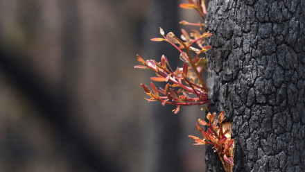 Regrowth in the Currowan forest after recent fires. Photo: Jamie Kidston