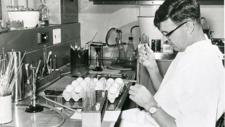 Frank Fenner inoculating chick-developing embryos with a virus suspension as part of his research into the genetic interaction between animal viruses. Circa 1950.