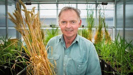 Distinguished Professor Graham Farquhar. Image by Stuart Hay.