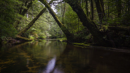 Image of Tyers River surrounded by trees.
