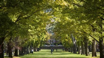 University Avenue. Photo by Stuart Hay, ANU.