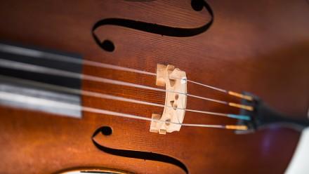 Violin. Image by ANU photographer Stuart Hay.