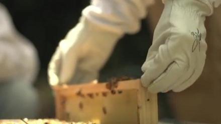 Beekeeper handling beehive