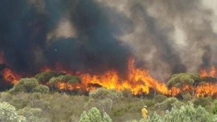 Image of bushfire