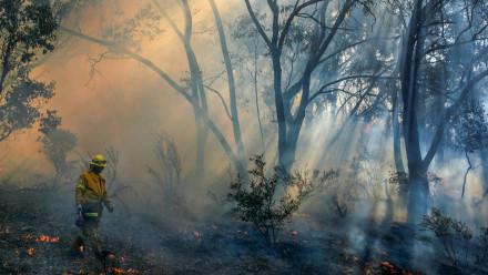 A bushfire and a fireman