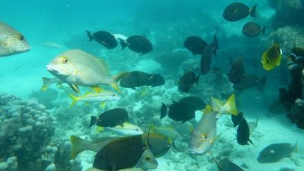 Ningaloo Reef, West Australia. Image: CSIRO.