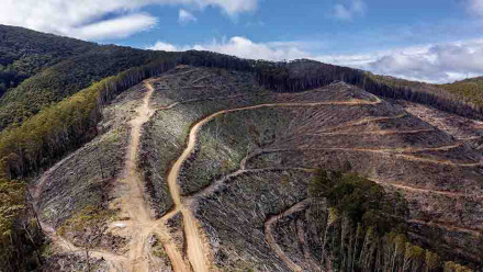 Illegal logging on a steep slope in Victoria's Central Highlands. Photo: supplied