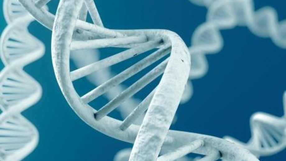 Undergraduate study in Biology