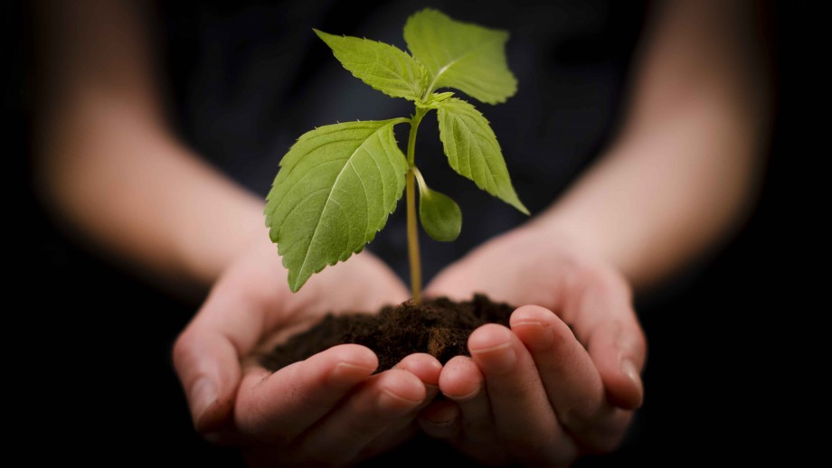 Plant Science at ANU