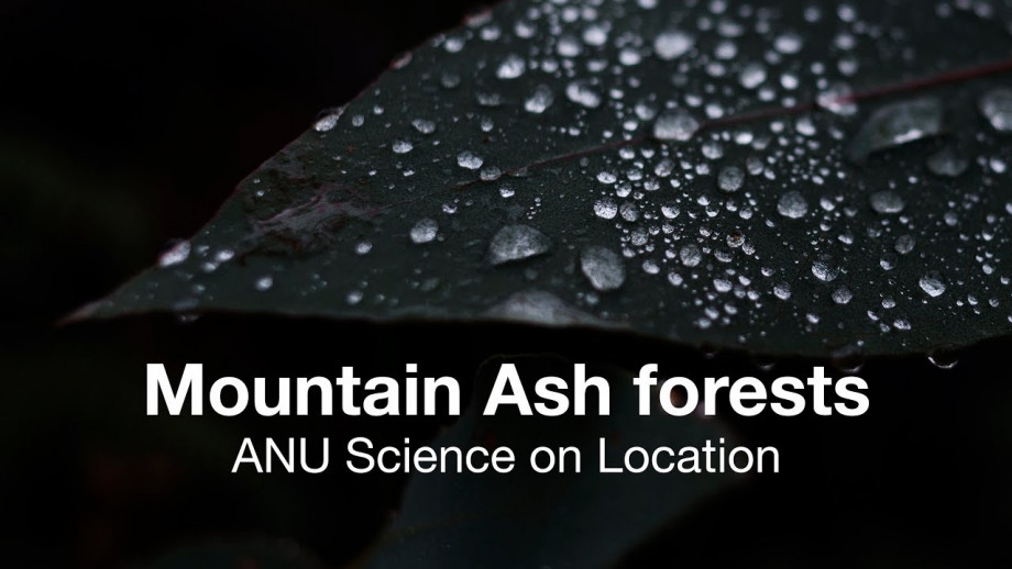 ANU Science on Location: Mountain Ash forests