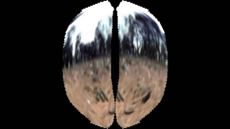 Wasp view simulation