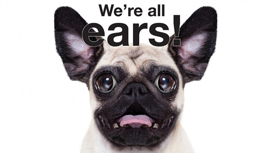 We're all ears! Excited pug with big ears sticking up.