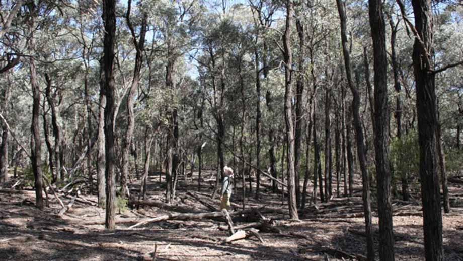 Southwood remnant. Image: Dr John Dwyer.
