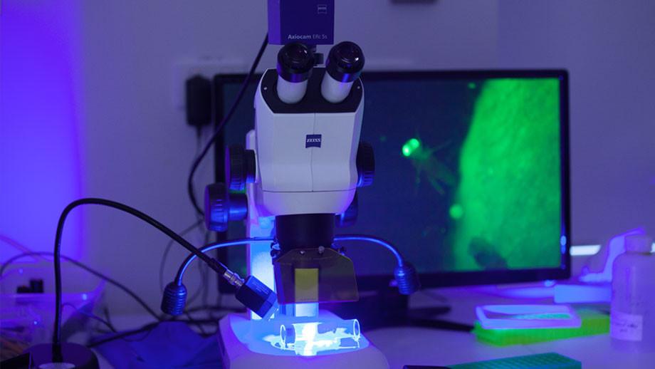 Dr Leonie Quinn's Lab