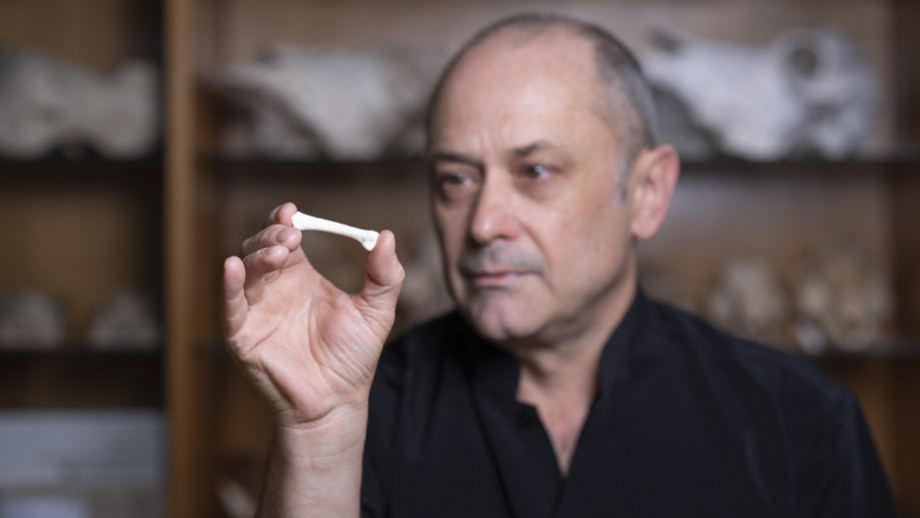 Professor Philip Piper from the ANU School of Archaeology and Anthropology inspects the cast of a hominin third metatarsal discovered in 2007. The bone is from a new species of hominin. Image: Lannon Harley, ANU