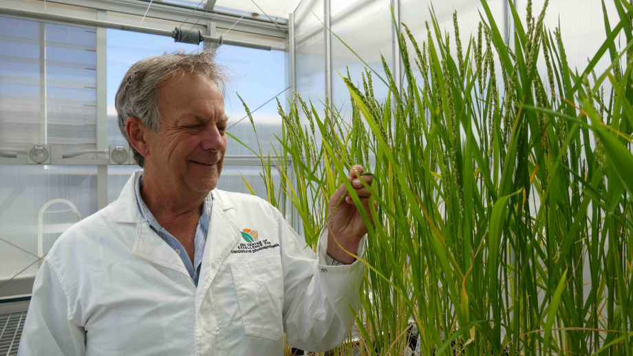 Professor Bob Furbank. Image credit: ARC Centre of Excellence for Translational Photosynthesis (CoETP)