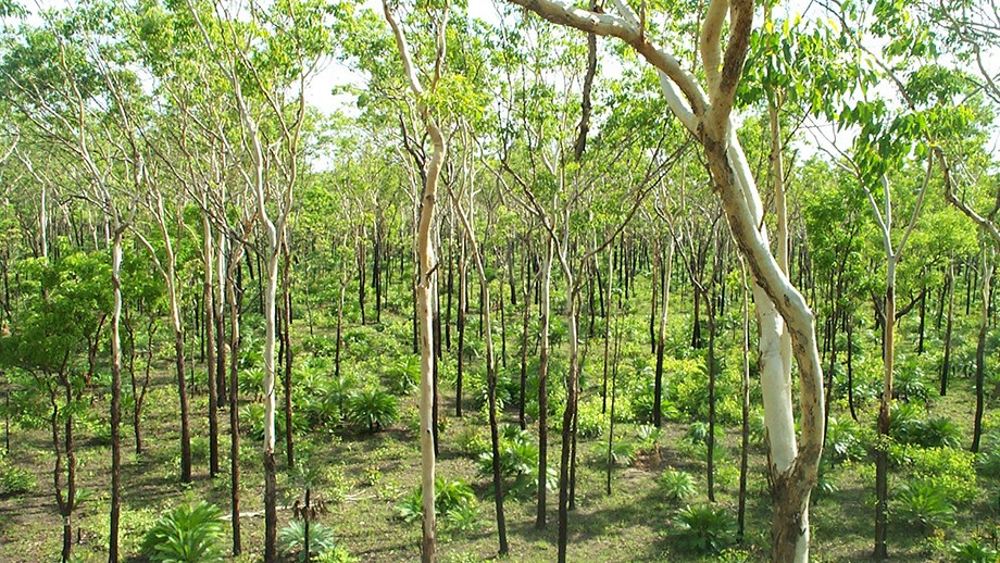 Green savanna from tree height. Image: CSIRO Science Images.
