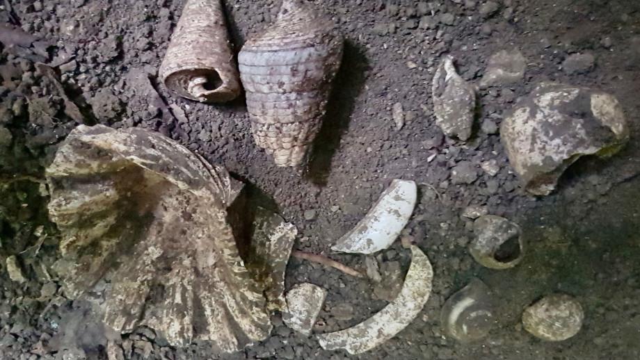 Marine shells on the rock shelter floor. Credit: ANU