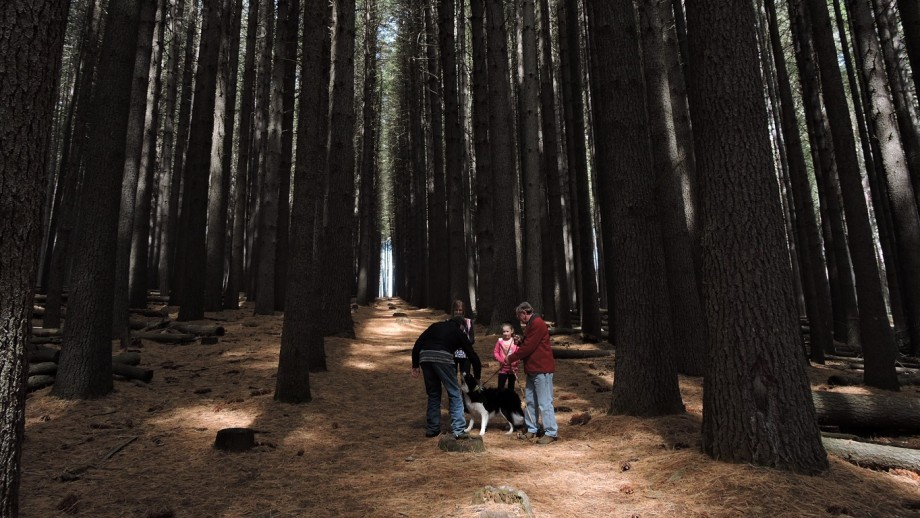 Laurel Hill Forest, near Tumbarumba. Photo by Peter Meusburger.