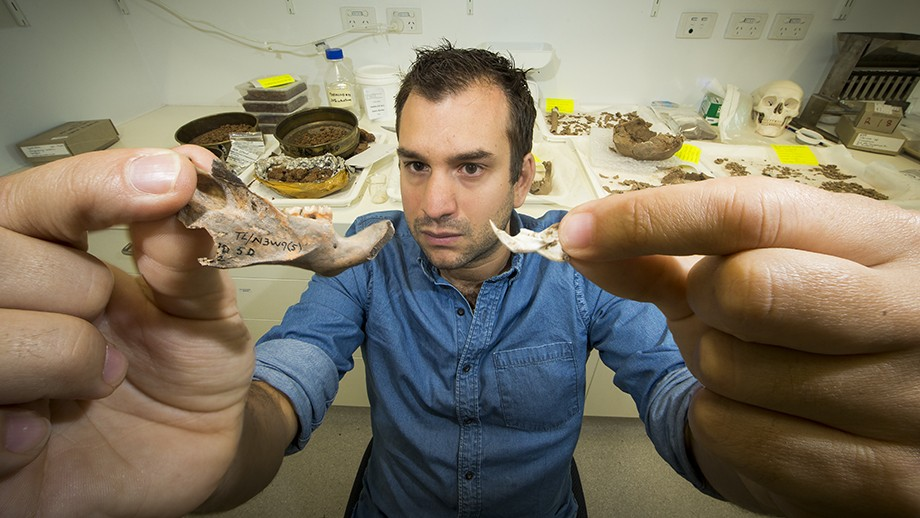 Dr Julien Louys holds the jaw bone of a giant rat species discocvered on East Timor, up against a comparison with the same bone of a modern rat. Image: Stuart Hay, ANU.