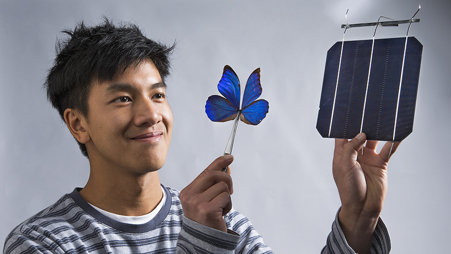 Co-researcher Kevin Le from ANU with a blue Morpho butterfly and a solar cell