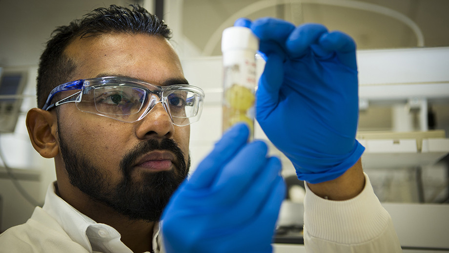 Faisal Younus investigating fruit fly damage to grapes and strawberries. Image: Stuart Hay, ANU