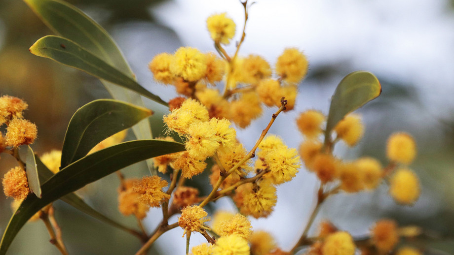 Photo of flower. Credit: Adam Spence, ANU College of Arts & Social Sciences.