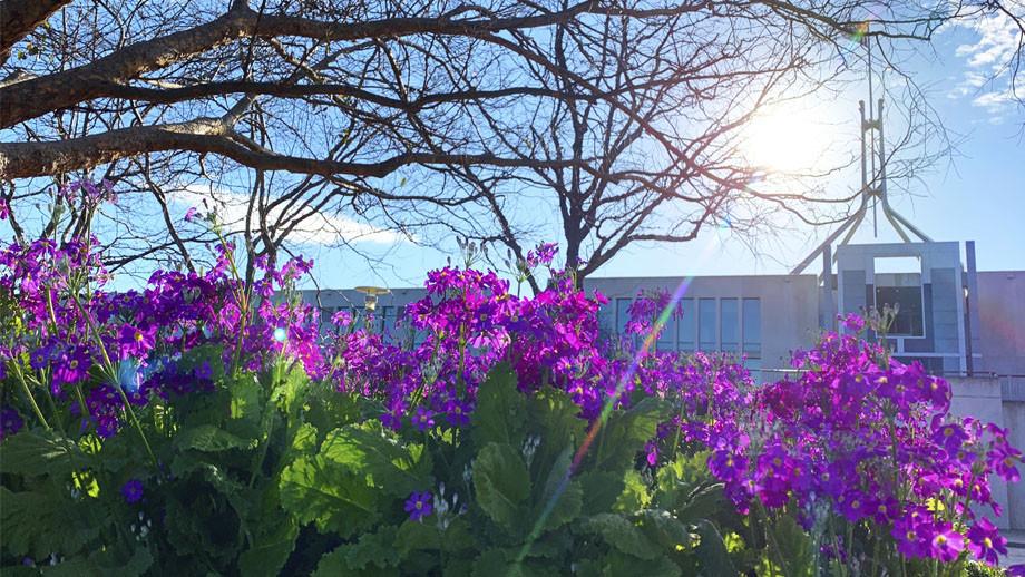 Flowers in Australian Parliament House garden. Credit: Adam Spence, ANU College of Arts & Social Sciences.