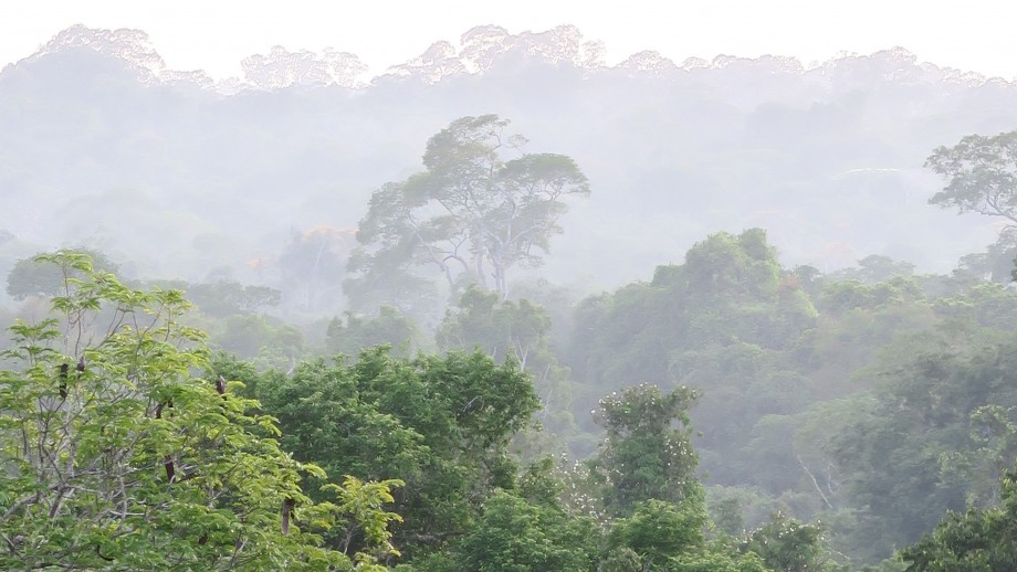 Amazon rainforest. Image Patrick Meir