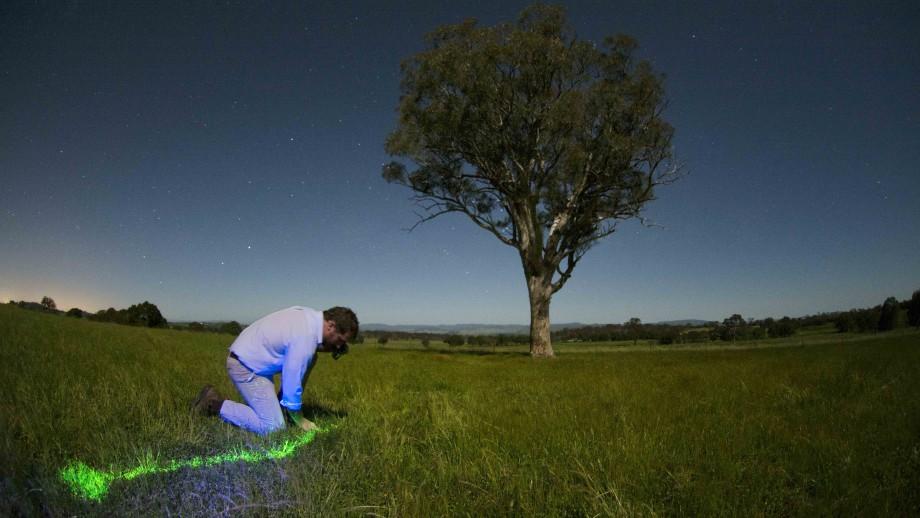 A gecko trail blazes through the night. Image: Ashley Kay.