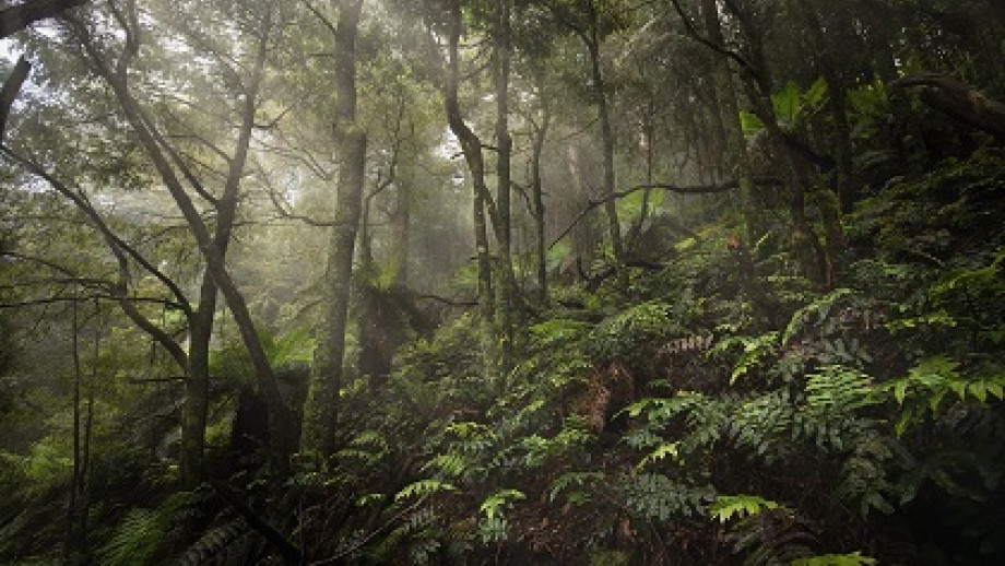 Photos of ferns in a forest with light streaming in.