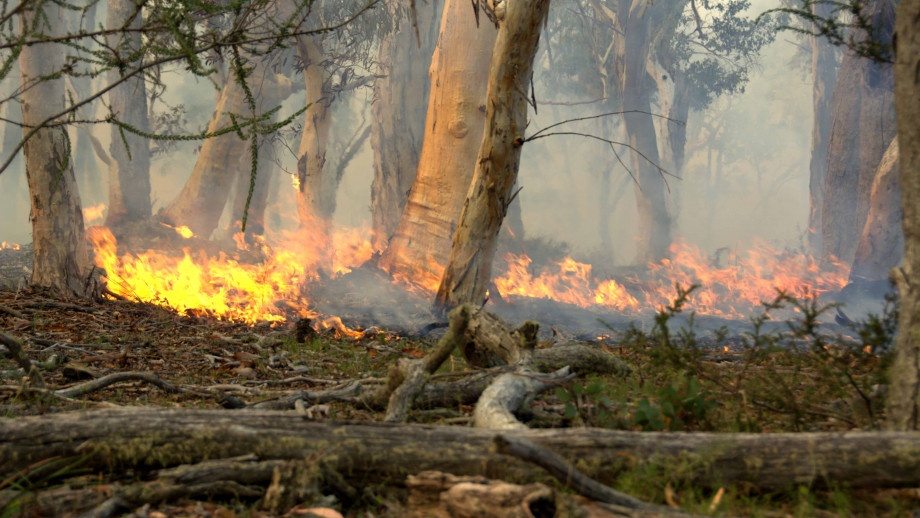 A forest fire burns