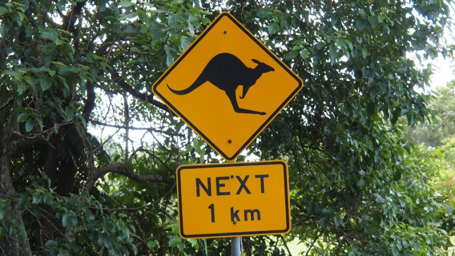 A new ANU study will compare the ability of beginner and experienced drivers to spot obstacles on the road. Image: Paul Arps, Flickr.