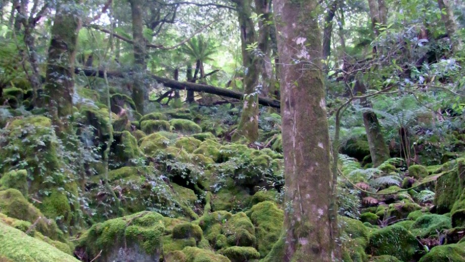 Southeast forests, NSW, Image Pete the Poet on flickr.com
