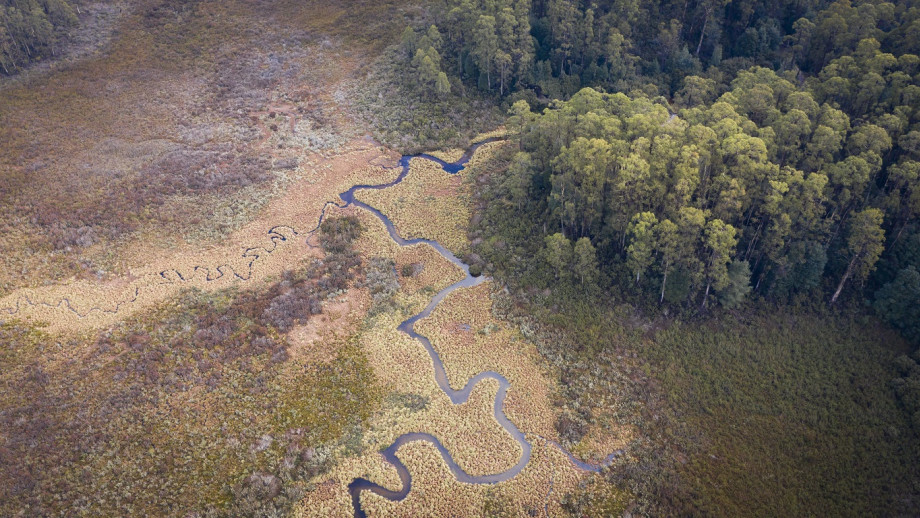 Aerial shot of the edge of forrest.