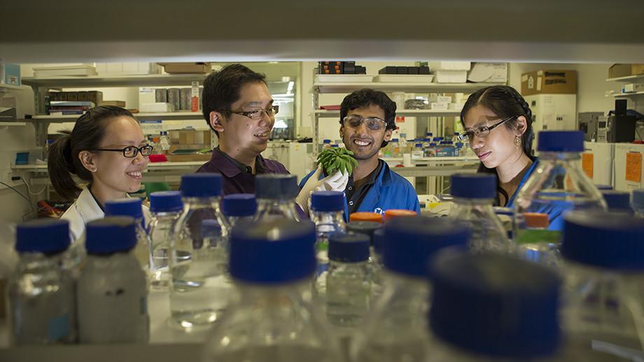 Researchers Dr Su Yin Phua, Dr Kai Xun Chan, Diep Ganguly and Estee Tee. Image: Stuart Hay, ANU.